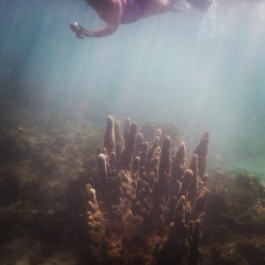Coral Swimming
